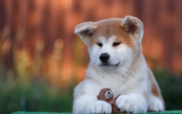 40 самых опасных пород собак, которые запрещены в Украине