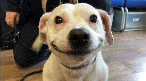 В Сети найдена самая улыбающаяся собака
