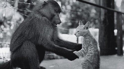 Фото: обезьяна учит кота обезьяньим повадкам