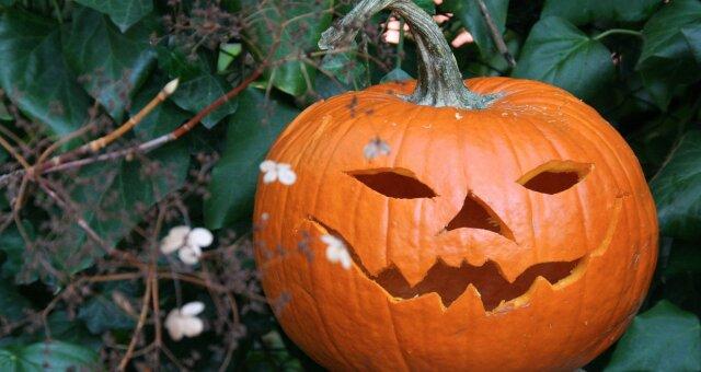 хэллоуин, 2020, праздник, фото, видео, идеи, мероприятия в киеве