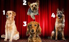 Тест на характер: вибери собаку і дізнайся, який чоловік тобі підходить
