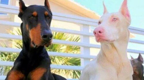 Тварини-альбіноси, які без меланіну виглядають краще, ніж зазвичай