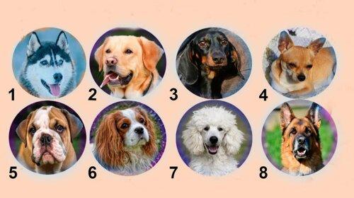 Тест на характер: яка собака тобі подобається?