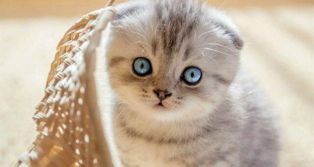 самые красивые и милые породы кошек