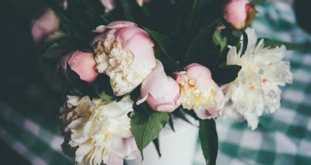 Кімнатні квіти для краси і здоров'я