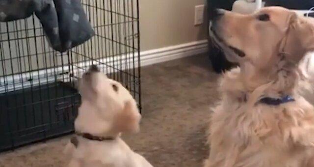 домашние питомцы, собака, фото, видео