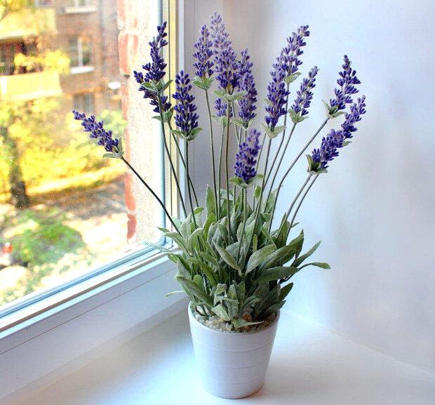 10 комнатных растений врагов для вирусов и бактерий в квартире