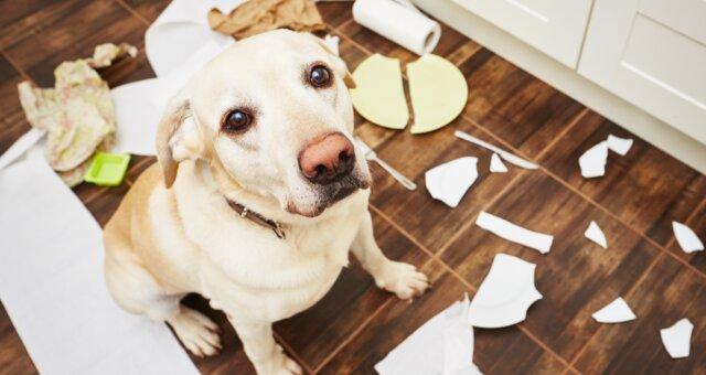 неуправляемые породы собак