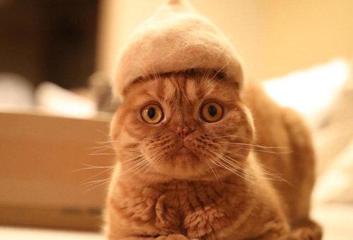 Японец делает шапки котикам из их собственной шерсти