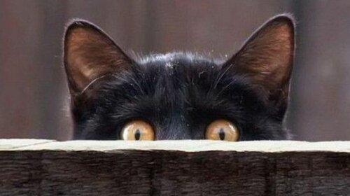 Главный защитник дома не собака, а кот: Приметы и суеверия, связанные с кошками
