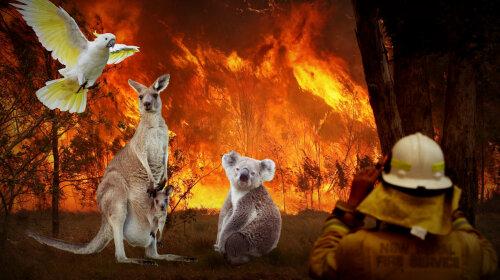 Пожежі в Австралії: ТОП-10 унікальних тварин, що живуть у цьому куточку світу