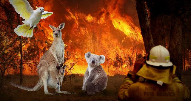 Пожары в Австралии: ТОП-10 уникальных животных, живущих в этом уголке мира