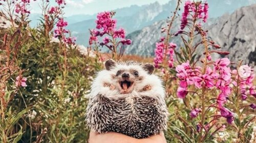 В Сети нашли самого счастливого ежика в мире (ФОТО)