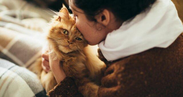 Породи кішок, які потрібно завести малорухливим людям