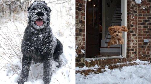 Топ-16 смішних фотографій: собаки, які радіють снігу як ніхто інший