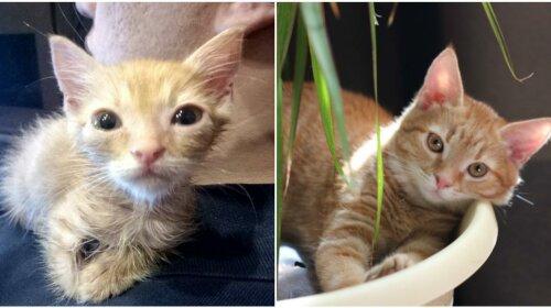 Коти, врятовані від бродячого життя