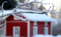 веточка-в-снегу-на-фоне-дома
