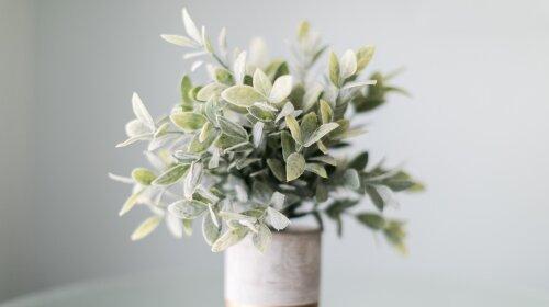 Комнатные цветы-дезинфекторы