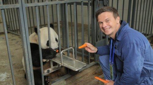 """""""Світ навиворіт"""": Дмитро Комаров показала, як рятував панд у Китаї –з'явилися унікальні кадри"""