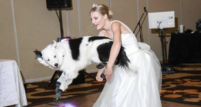 невеста танцует с собакой, танцующая собака, фото, видео