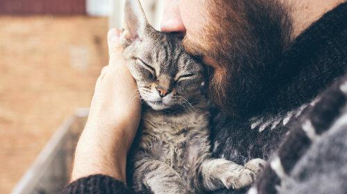 Як кішки можуть любити людину: фото