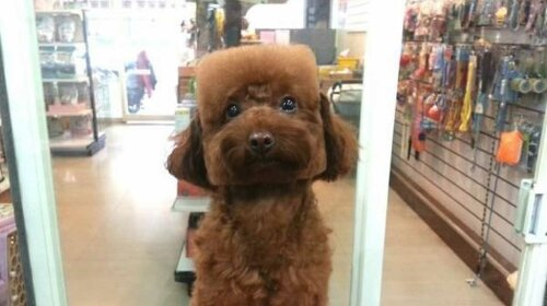"""Мережу розсмішили """"квадратні"""" собаки з Японії (ФОТО)"""