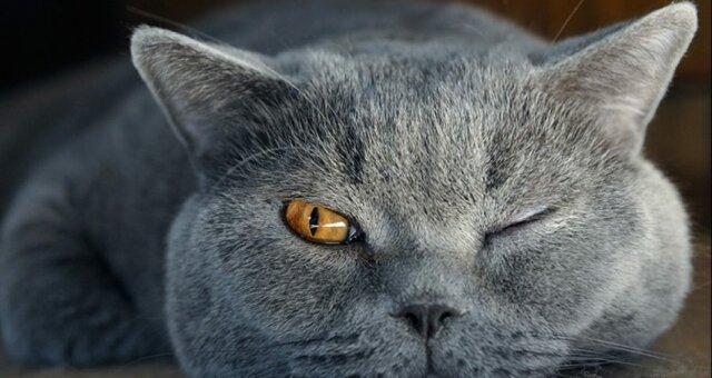 знак Зодиака, кошки, астрология