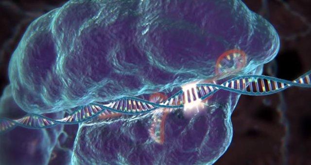 CRISPR-DNA