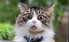 В Сети обсуждают видео, которое доказывает, что коты — это жидкость