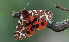 Ученые показали фото гигантской мохнатой бабочки из Чернобыля