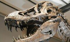 Ученые рассказали, как прошли последние часы жизни динозавров