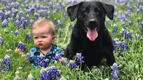Пост трогательности и милоты: дети и собаки, их отношения мало кого оставят равнодушным (подборка фото)