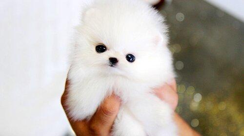 Самі милі маленькі породи собак