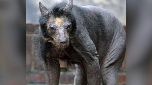 В Индонезии обнаружили неизвестное существо: как оно выглядит