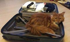 Семья случайно взяла в отпуск кота: правда вскрылась неожиданно
