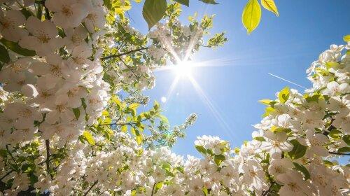 Настоящая весна: сколько еще будет длиться теплая погода в Украине