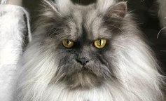Самый хмурый кот в мире Джуно