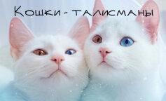 Кішки-талісмани: породи кішок, успіх
