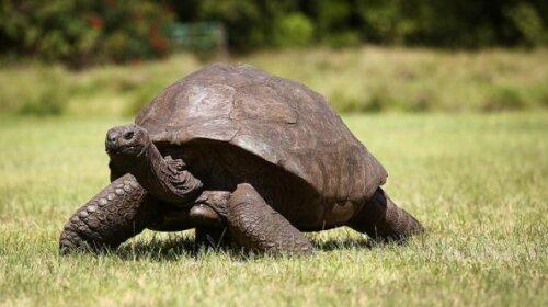 6 животных, которые живут уже больше сотни лет (ФОТО)