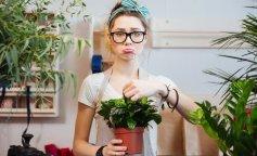 Комнатные цветы, опасные для здоровья