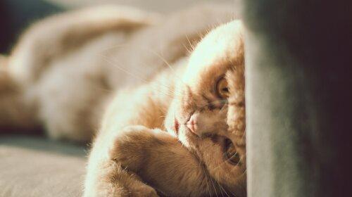 Строгий кот: такого сурового коты вы еще не видели