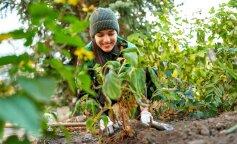 Волонтери посадили 1000 дерев біля 56 українських лікарень