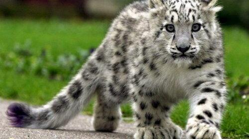 Мільйон видів тваринного і рослинного світу знаходяться на межі зникнення