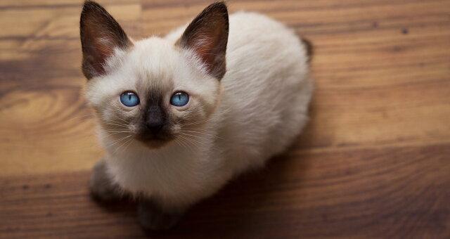 Самые преданные кошки