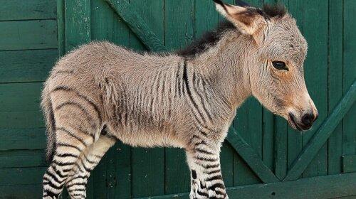 SPL_zebra_donkey_mthg_130725__16x9_1600