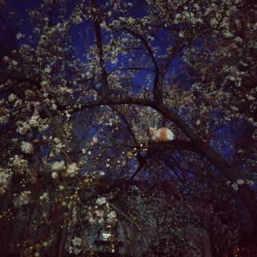 Photo by IROK on May 05, 2020. Image may contain: tree, sky, night, outdoor and nature