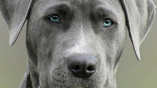 Ученые показали, какими были собаки 10 000 лет назад