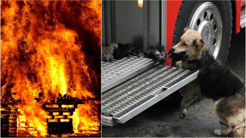Собака спасла щенков из пожара и спрятала в пожарной машине