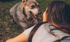 Пользователи показали своих собак в самых невероятных позах: флешмоб рассмешил Сеть
