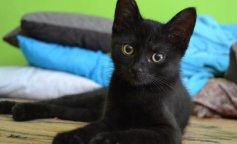 Котенок с редким генетическим отклонением покорил сеть своей внешностью (фото и видео)